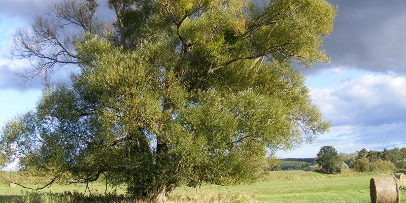 Landschaft Fewo Urstromland